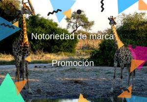 Notoriedad de marca / promoción